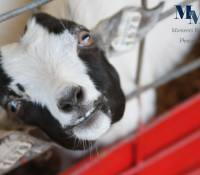 Are you ready for the Wilson County Fair?